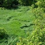 Crop Circles in Hewitt!